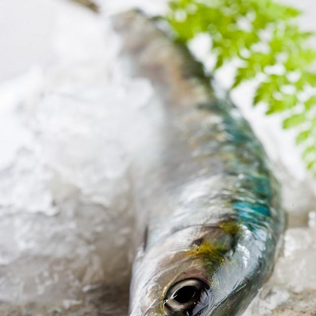 vista de una sardina con hielo