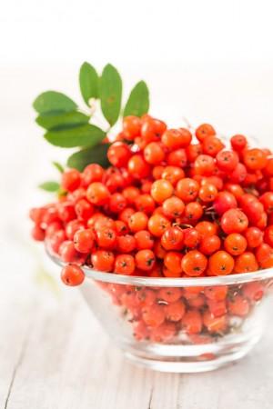 10925 Fruto del serbal